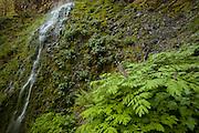 Columbia River Gorge, Oregon.