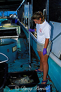 Corinne Rose, volunteer at the Turtle Hospital, Marathon, Florida, administers an i.v. lactated Ringer's solution to rehydrate a green sea turtle<br /> suffering from fibropapilloma tumors