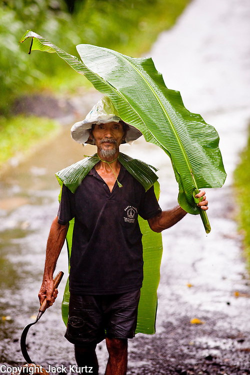 Apr. 22 - UBUD, BALI, INDONESIA:    A man uses a banana leaf as an umbrella during a rain storm in Ubud, Bali. Photo by Jack Kurtz/ZUMA Press.