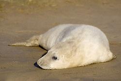 July 21, 2019 - Seal Lying On Beach (Credit Image: © John Short/Design Pics via ZUMA Wire)