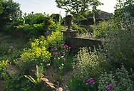 Dianthus 'Devon Wizard' and Alchemilla mollis next to stone urns and a wall at Cothay Manor, Greenham, Wellington, Somerset, UK