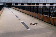 A day after the Covid Freedom Day, when social distancing and the wearing of face coverings are no longer mandatory, though the majority of City workers remain working from home, a squirrel walks over Bassishaw Highwalk, on 21st July 2021, in London, England.
