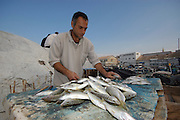 Israel, Jaffa, The old port Fisherman with the catch of the day