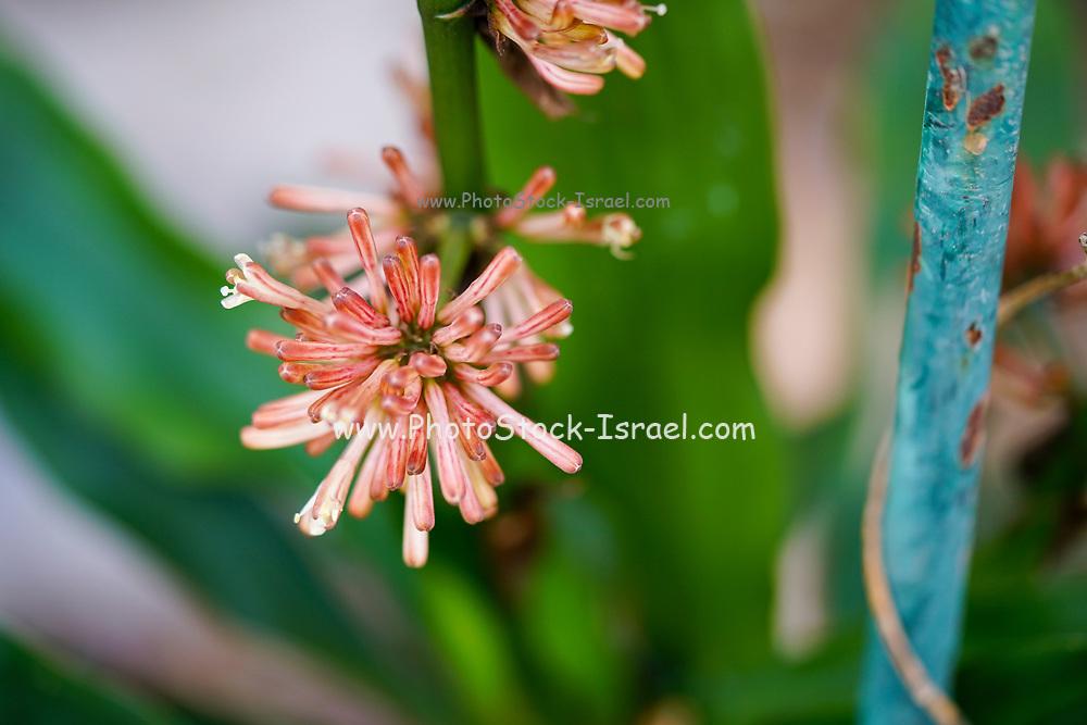 Closeup of a delicate orange flower