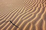 wind patterns Sand Dune