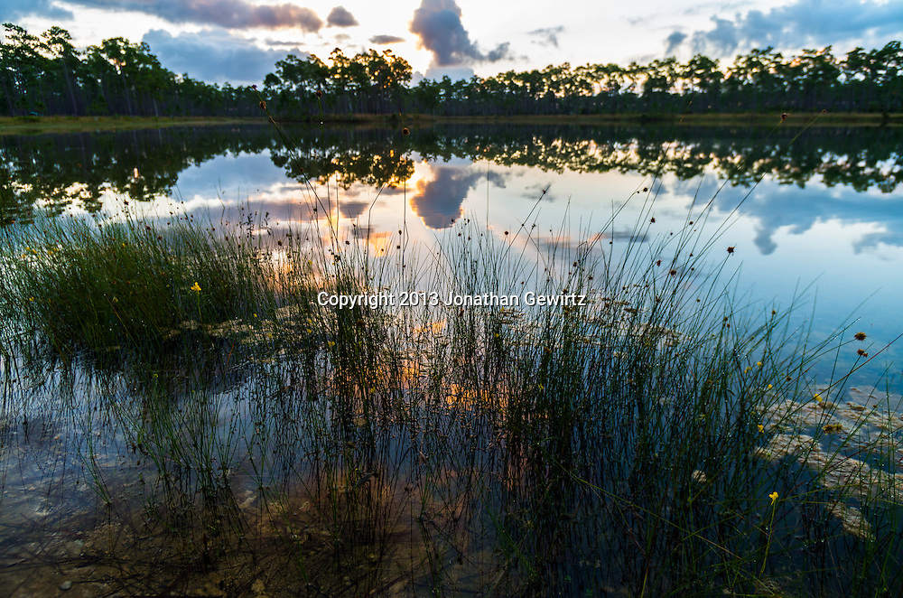 The sun rises behind an island of slash pines in the pond at Long Pine Key in Everglades National Park, Florida. WATERMARKS WILL NOT APPEAR ON PRINTS OR LICENSED IMAGES.