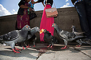 Pigeons fight for food scraps thrown to them by tourists on the riverside walkway. The South Bank is a significant arts and entertainment district, and home to an endless list of activities for Londoners, visitors and tourists alike.