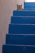 Cat at the top of blue stairs
