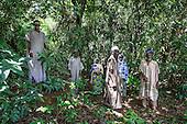 Togo - Forest