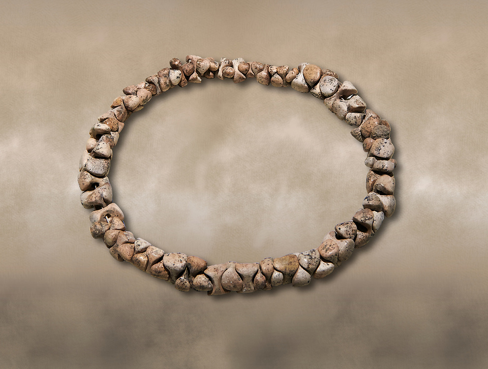 Bone necklace. Catalhoyuk Collections. Museum of Anatolian Civilisations, Ankara .<br /> <br /> If you prefer you can also buy from our ALAMY PHOTO LIBRARY  Collection visit : https://www.alamy.com/portfolio/paul-williams-funkystock/prehistoric-neolithic-art.html - Type Catalhoyuk into the LOWER SEARCH WITHIN GALLERY box. Refine search by adding background colour, place, museum etc.<br /> <br /> Visit our PREHISTORIC PLACES PHOTO COLLECTIONS for more  photos to download or buy as prints https://funkystock.photoshelter.com/gallery-collection/Prehistoric-Neolithic-Sites-Art-Artefacts-Pictures-Photos/C0000tfxw63zrUT4