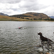 A dog watches the dimming leg during the Active Q T Ultimate Tri Series Jack's Point Triathlon, Jack's Point,  Queenstown, Otago, New Zealand. 14th January 2012. Photo Tim Clayton