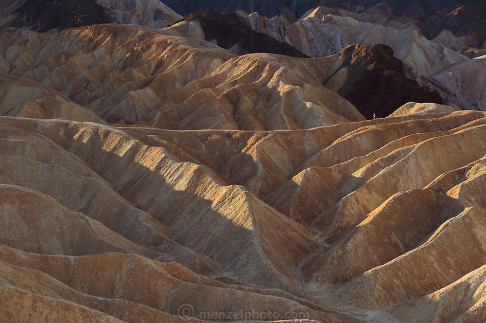 Zabriskie Point, Death Valley National Monument, California/ Nevada. Adam Guerrieri runs on the ridge. USA.