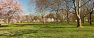 New Jersey, Newark, Branch Brook Park Spring Cherrry Blossom