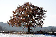 tree with leaves still on the branches during winter season