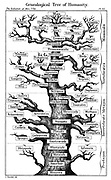 Haeckel's scheme of  evolution displayed in the form of a tree. From Ernst Haeckel 'The Evolution of Man' fifth edition, London, 1910