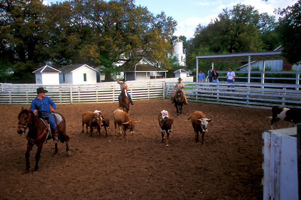 three men herding catlle on a ranch