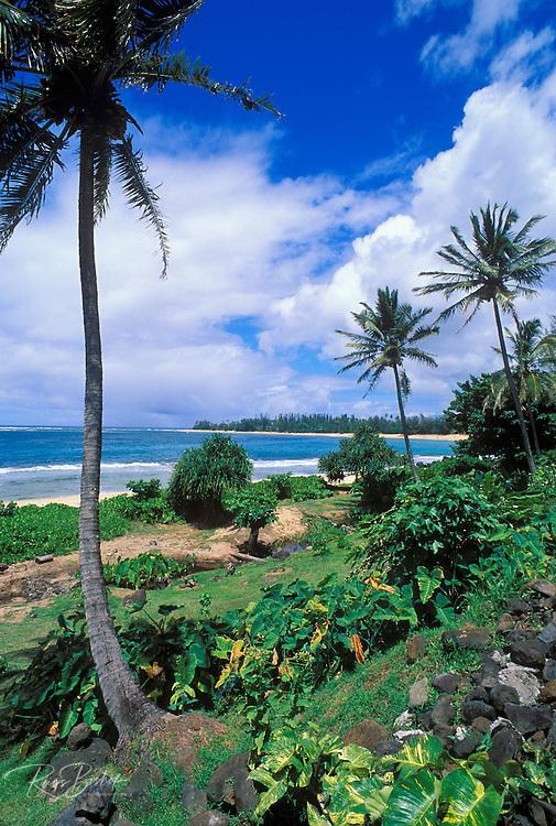 Coconut palms and lush foliage above Tunnels Beach, North Shore, Kauai