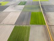 Nederland, Flevoland, Noordoostpolder, 16-04-2012; Ankertocht met bloembollenvelden en akkers die op het punt van bloeien staan. Boerderijen en kavels op regelmatige onderlinge afstand, voorbeeld van moderne grootschalige polder met rationele verkaveling. De aanleg van de polder maakte deel uit van de Zuiderzeewerken (plan Lely) en viel in 1942 droog. De meeste boerderijen (en dorpen) zijn van na de tweede wereldoorlog. The northeast polder (NOP), is an example of modern large-scale polder with rational allotment. The construction of the polder was part of the Zuiderzee Works (Lely plan), in 1942 the polder was dry. Most of the building, farmhouses and villages, is post-war...QQQ.luchtfoto (toeslag), aerial photo (additional fee required).foto/photo Siebe Swart