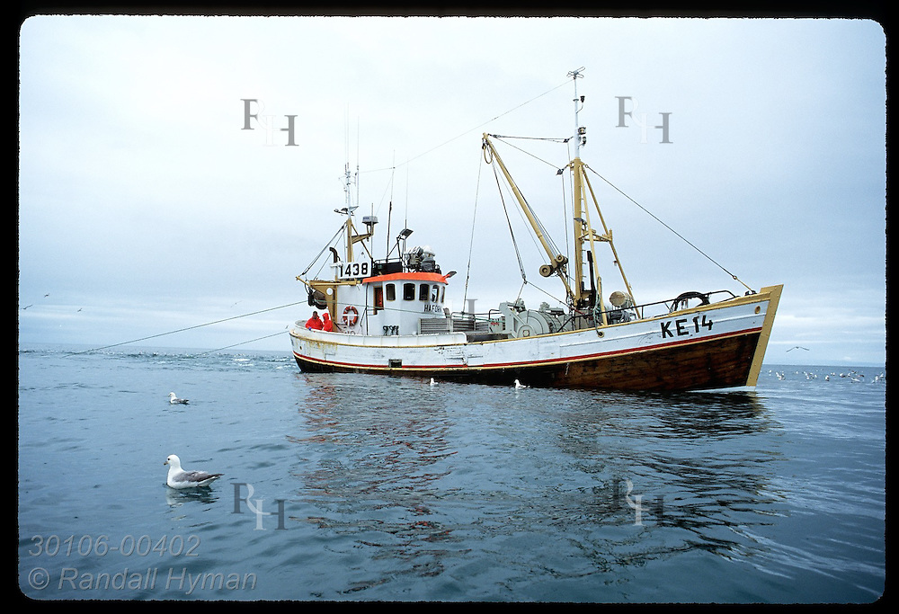 Gillnet boat, one of only seven allowed to fish Faxafloi Bay, fishes for flounder in July. Iceland