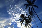 Palm Trees, Hawaii, USA<br />