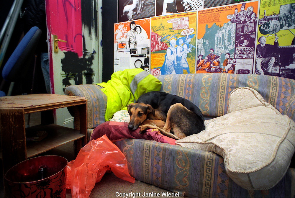 Dog asleep on sofa in communal area in St Agnes Place squat.