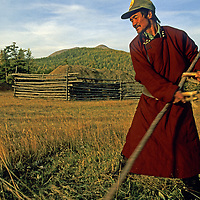 MONGOLIA, Lake Hovsgol. Herder uses sythe to cut grass to feed his family's animals during winter months ahead.