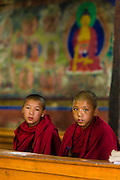Young Buddhist monks during a morning ceremony (puja) at Thiksey Monastery, Ladakh, India