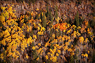 Autumn at Savoy in Spearfish Canyon with all its colors at peak.