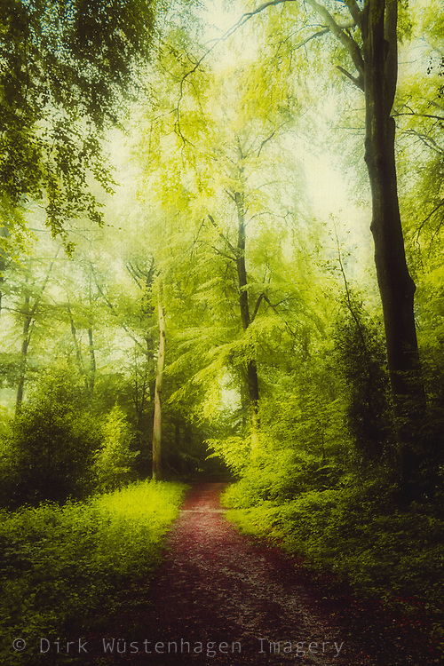 Path through a deciduous forest on a summer morning<br /> --> Prints - https://rdbl.co/2NVNPTG