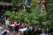 Open to the public on occasional Sundays, visitors have tea in the Barbican Conservatory in the City of London, on 27th January 2019, in London, England. The conservatory houses more than 2000 species of plants and trees, as well as terrapins and koi carp. Admission to the conservatory is free but public opening times are very limited; currently only afternoons on Sundays and some Bank holiday Mondays. Opening days and times are given on the Barbican website.