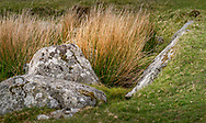 View of the Bodmin Moor just below Stowe's Hill and the Cheesewring rock formation in Cornwall.