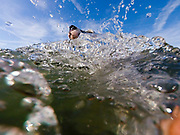"""English Setter Welpe """"Rudy"""" schwimmt am 11.06. 2017 im Teich von Stara Lysa, (Tschechische Republik).  Rudy wurde Anfang Januar 2017 geboren und ist vor einiger Zeit zu seiner neuen Familie umgezogen."""
