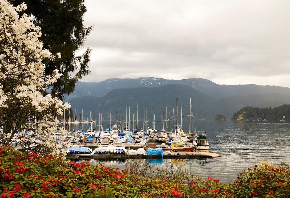 Sailboats in Springtime in Deep Cove Harbor, British Columbia, Canada