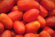 Close up, selective focus photograph of Plum tomatoes