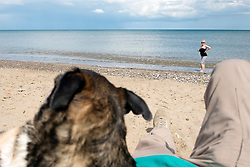 The door watching dog becomes the shore watching dog while Aileen paddles in the sea at Hornsea Beach <br /> <br />   1 August 2017 <br />   Copyright Paul David Drabble<br />   www.pauldaviddrabble.co.uk