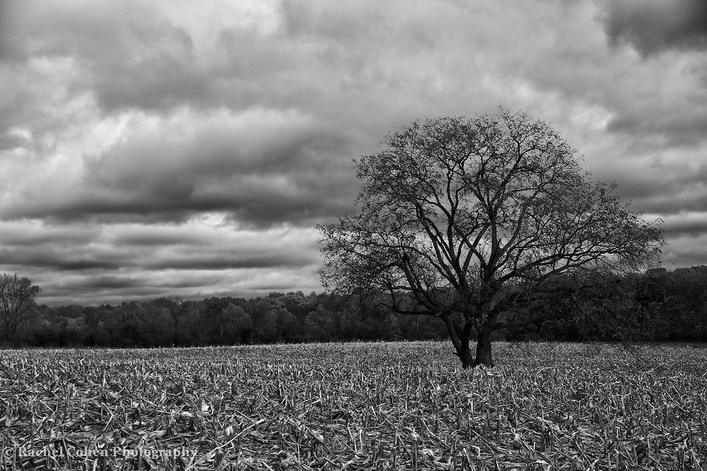 """""""Autumnal Equinox"""" B&W<br /> <br /> A wonderful black and white image of a lone tree during autumn. Standing in the middle of a harvested cornfield. Dark clouds loom overhead, giving this image depth and mood!!<br /> <br /> Black and White images by Rachel Cohen"""