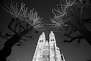 Fine-Art images-Tree-France hoàng thế nhiệm