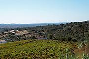vineyards monte da penha alentejo portugal