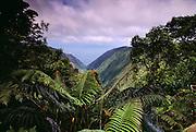 View from Kamakou Preserve rain forest, Molokai, Hawaii. USA.