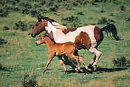 HORSES OF THE JEMEZ COUNTRY
