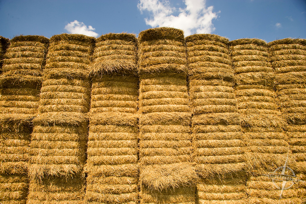 Square bales of hay stacked in field.