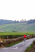 cyclist vineyard beaune cote de beaune burgundy france