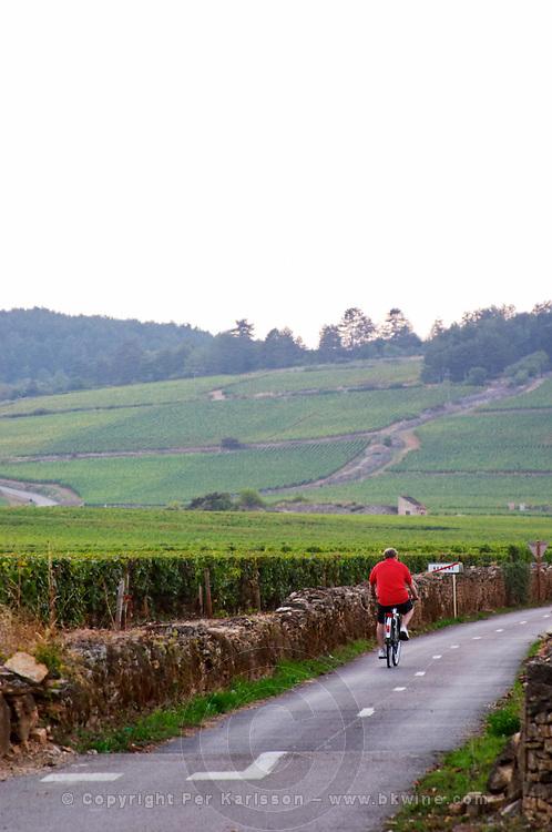 cyclist vineyard beaune cote de beaune burgundy france