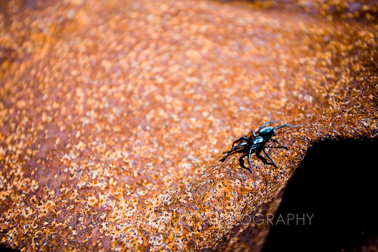 Spider on rock, close-up