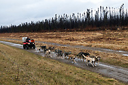 A woman runs her sled dogs using a four wheeler in the early fall before the snow comes.