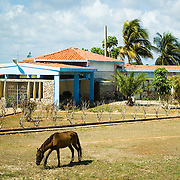 A horse out to pasture next to a residence in rural Cuba.