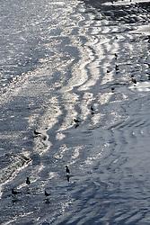 Surf On Beach With Sea Birds