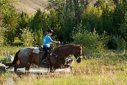 Trail Riding-Horses