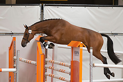 056 - Ejiry Fortuna<br /> KWPN Paardendagen - Ermelo 2012<br /> © Dirk Caremans