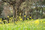 Mediterranean Woodland, Sierra de Andujar Natural Park, Sierra Morena, Andalucia, Spain